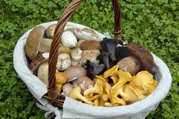 Směs letních druhů hub