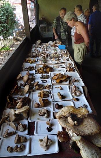 I přes panující sucho se našlo dostatek zajímavých druhů hub