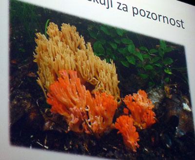 Kuřátkovité - tvarově ibarevně zajímavé houby