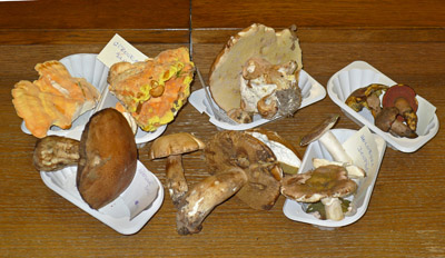 Některé aktuálně rostoucí druhy hub