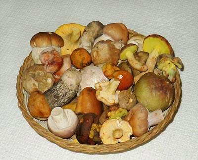 Pestrá směs jedlých hub - skvost vhoubařově kuchyni ...