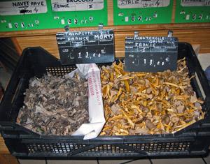 Stročky trubkovité ališky nálevkovité ztéhož tržiště