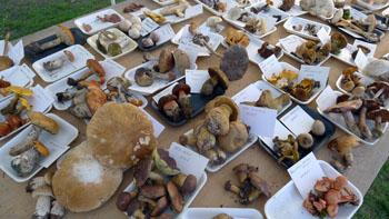 Výstavka aktuálně rostoucích hub - foto: Aleš Vít