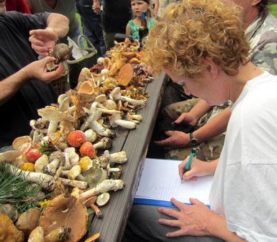 V notesu se nakonec objevilo 110 určených druhů hub - foto P. Hampl