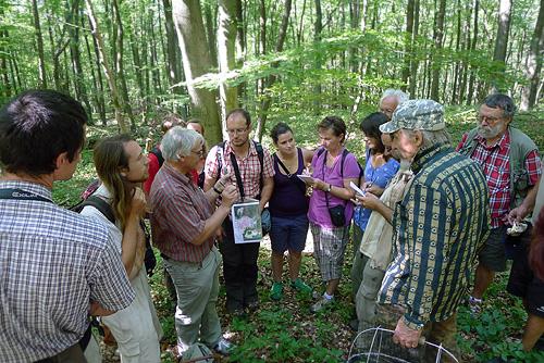 Dr. Fellner podává ke všem doneseným houbám náležitý komentář - (na snímku probíhá demonstrace růžovění mléka ryzce ostrého - Lactarius acris)