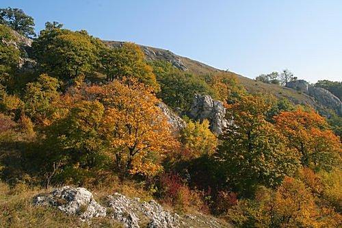 jižní svah Děvína se skalní stepí sroztroušenými stromy - foto: Radim Dvořák