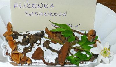 Sclerotinia tuberosa