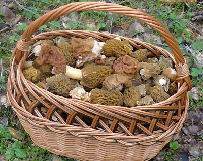 jarní houby pro kuchyni