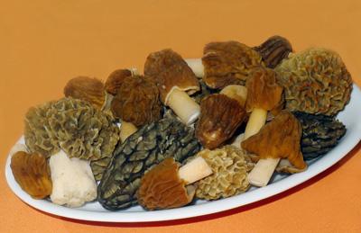 směs jarních jedlých hub
