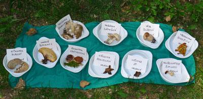 aktuálně rostoucí houby vokolí