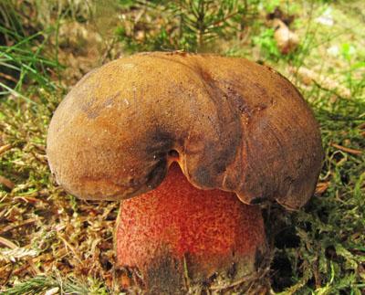 vcelku zřídkavý jev – snímek houbového pozadí…