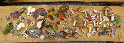 nezbytné pomůcky pro houbařskou diskuzi