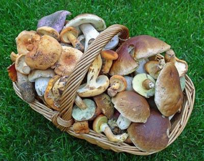 směs letních druhů hub...