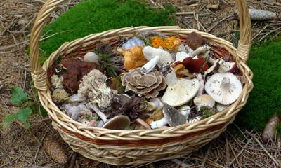 ukázka sběru hub pro výstavu