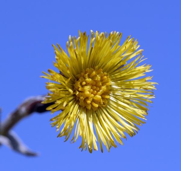 3.jak se jmenuje léčivá bylina, které patří květ na snímku?