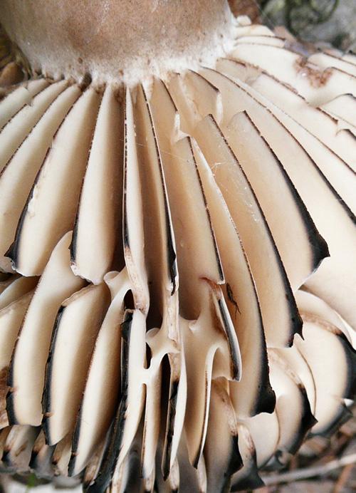 2.tipněte si český název houby vdetailu - (foto: Marie Sobotková - foto soutěž ČMS 2011)