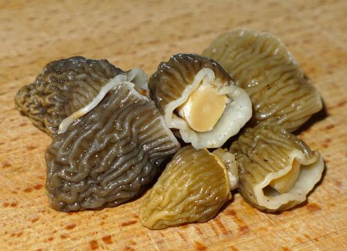 kačenky jsou vítaným atradičním jarním potěšením každého houbaře kulináře