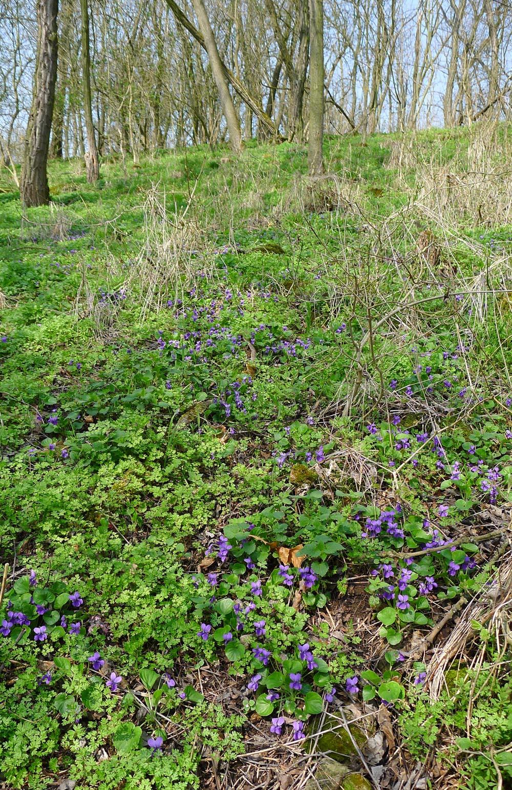k jarnímu houbaření lákají především prosvětlené adoposud neolistěné háje