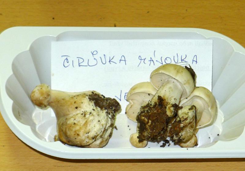 čirůvka májovka-Calocybe gambosa, tržní druh