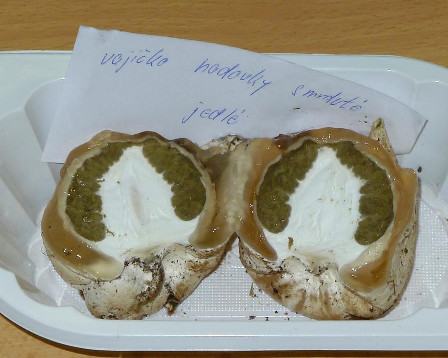 hadovka smrdutá – Phallus impudicus, ve stádiu vajíčka jedlá