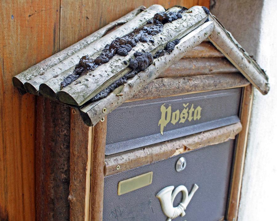 černorosol sp. kolonizující dřevěnou stříšku poštovní schránky