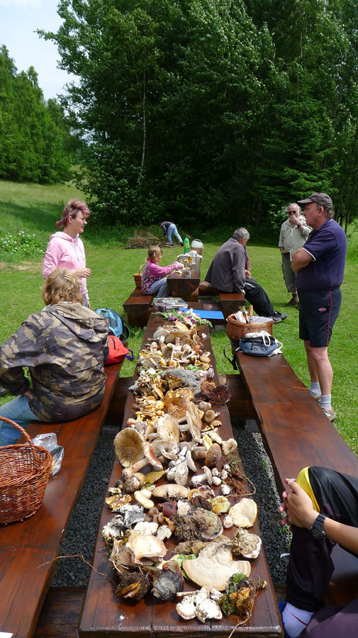 houbařská škola vpřírodě