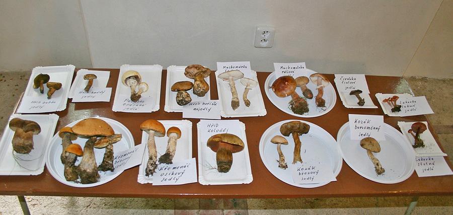 část vystavených aktuálně rostoucích hub
