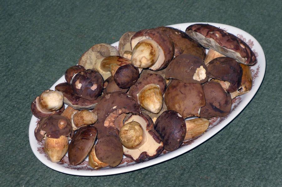 pro kuchyni houby aktuálně rostou, ikdyž jen na vybraných místech