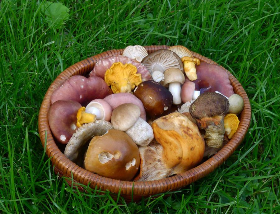 letní směs hub zlesů kolem Držkova