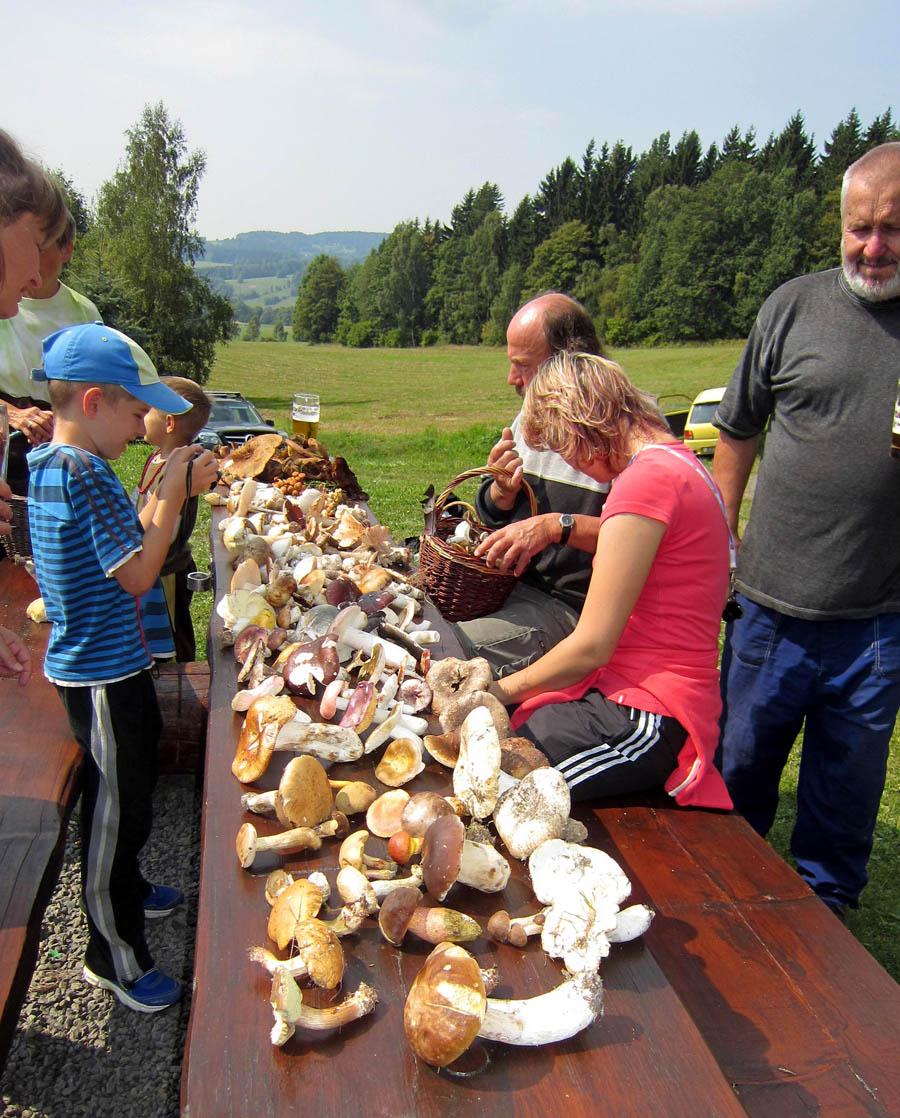 Studium hub ve volné přírodě