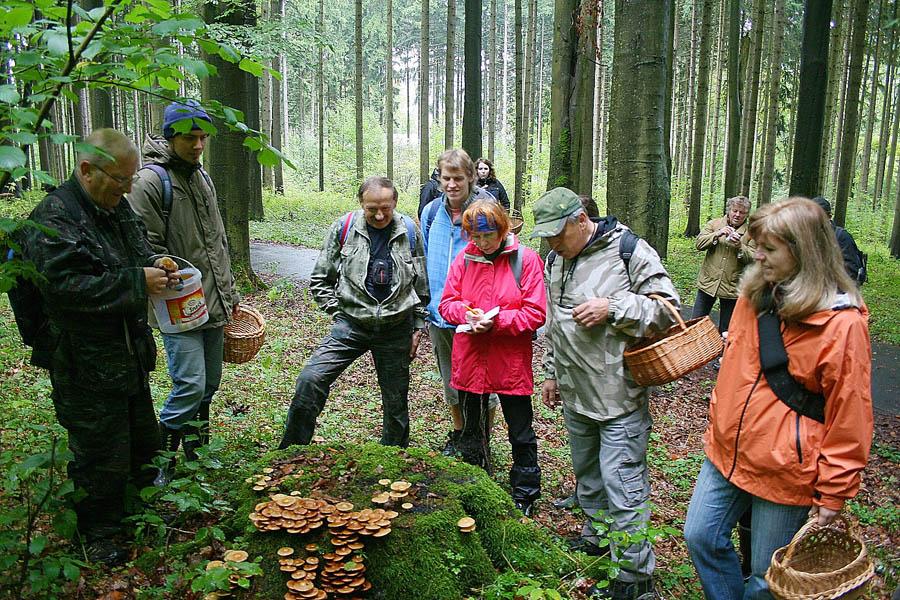terénní houbařská osvěta upařezu sopeňkami
