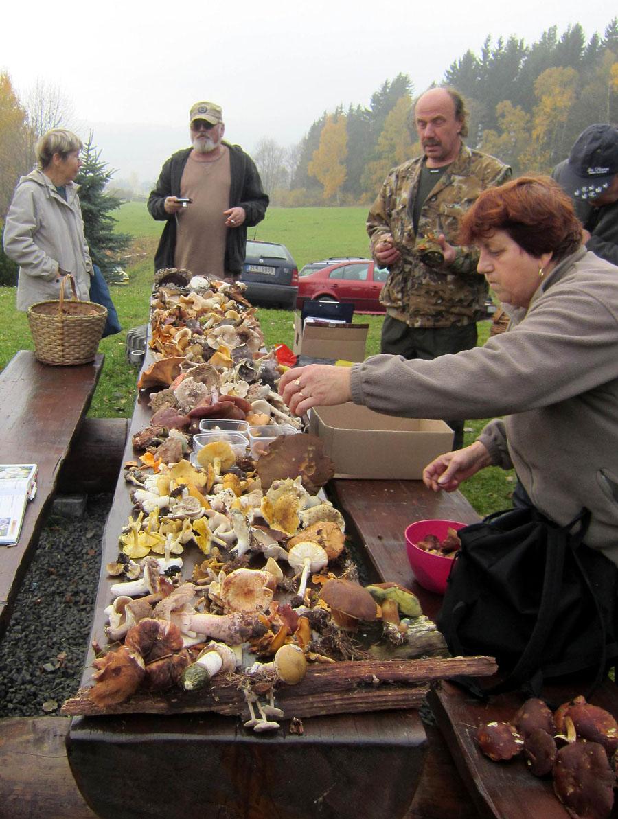 defilé nalezených druhů hub