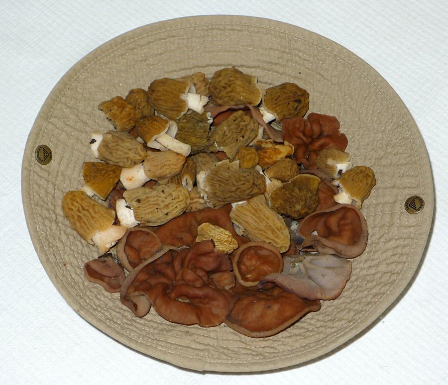 klobouk sjarním houbařským potěšením