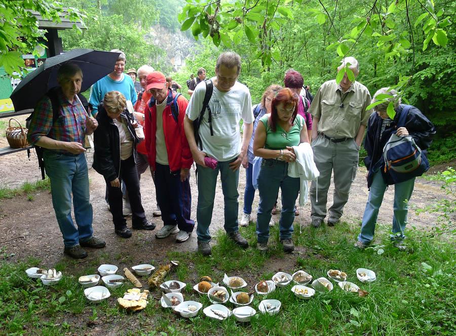příchozí obdivovali počet druhů právě rostoucích hub