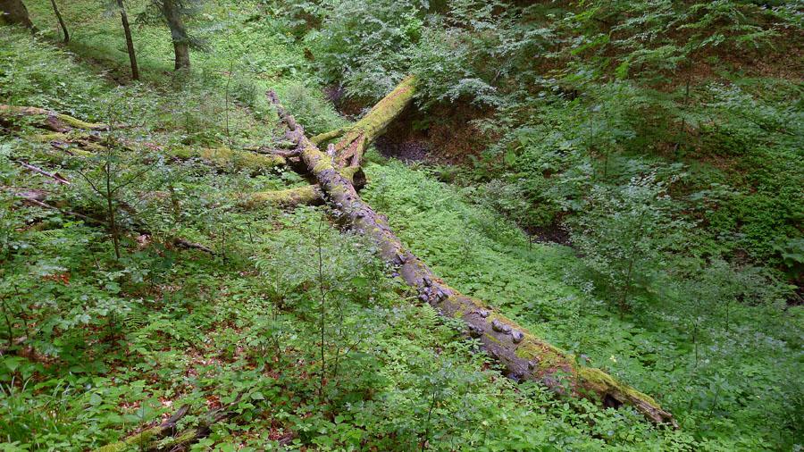 malebné pralesní partie