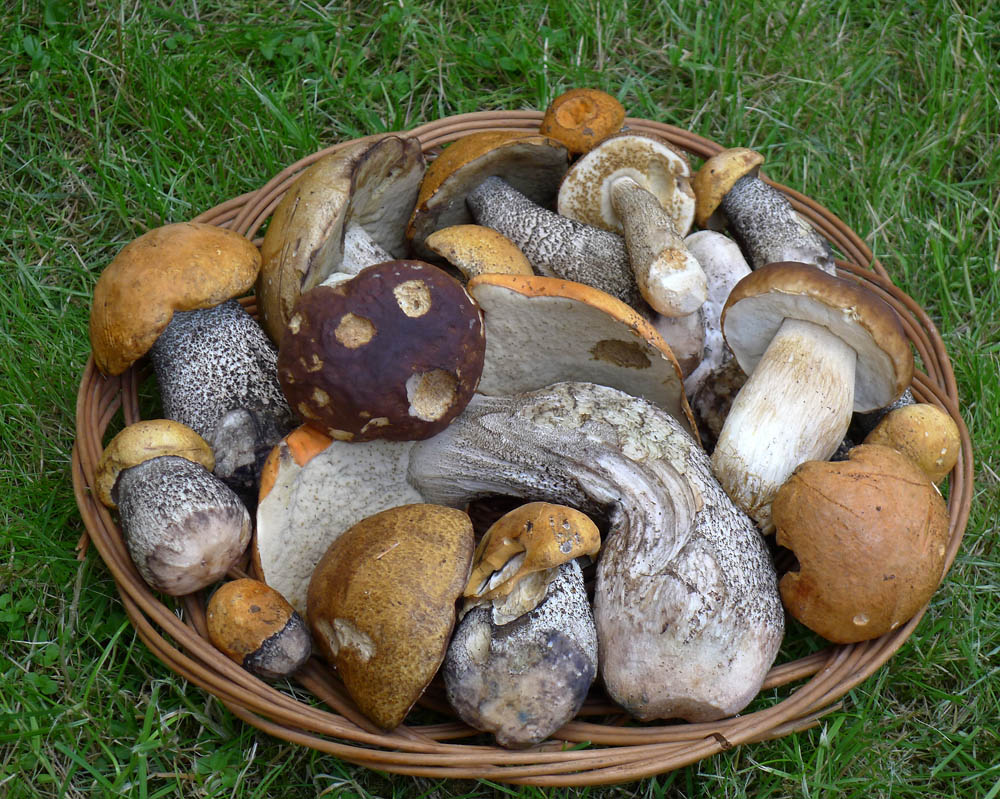 ošatka houbařské radosti