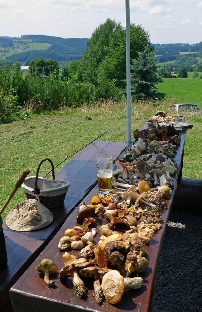 zaktuálních nálezů hub vmalebném prostředí Jizerských hor…