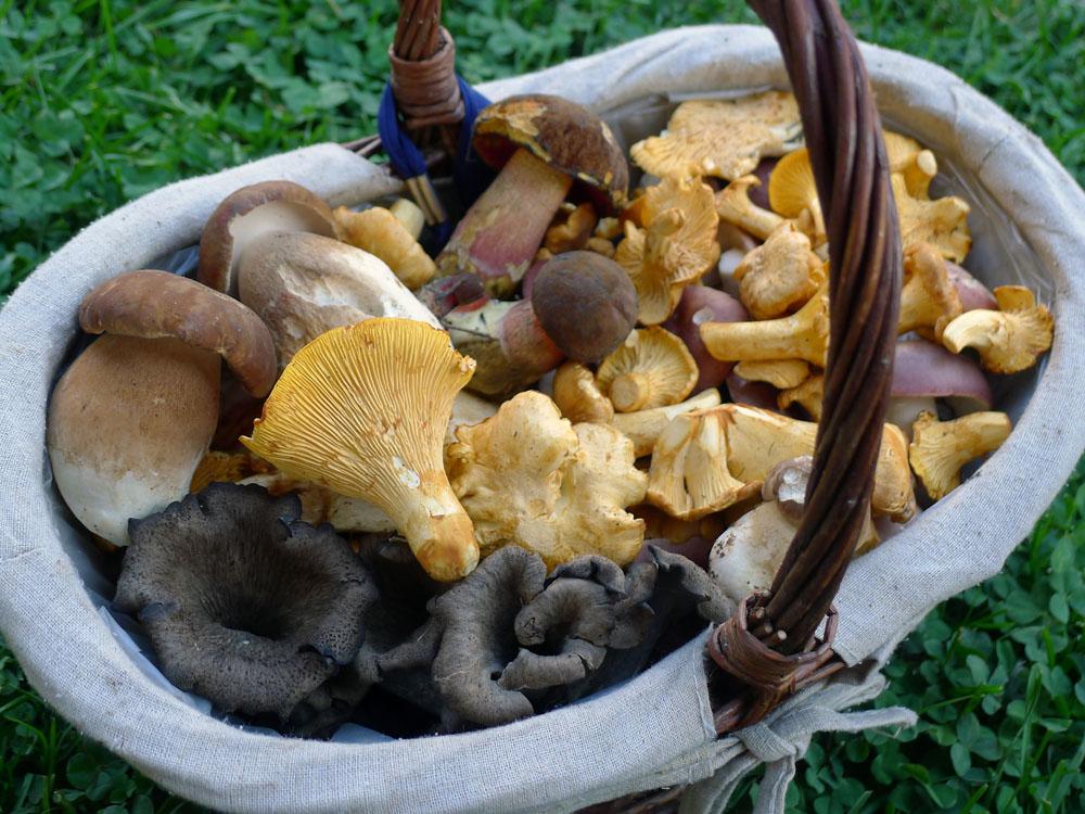 vybraná směs aktuálně rostoucích jedlých hub