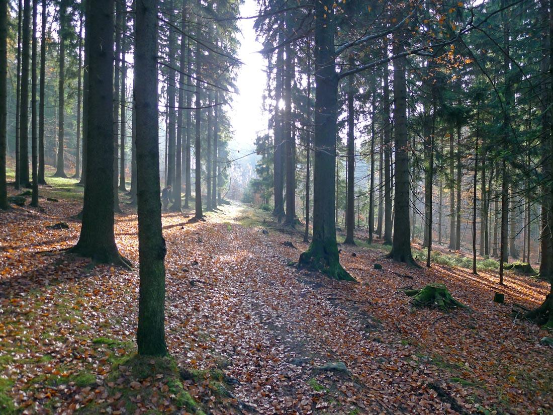 pohoda podzimního lesa…
