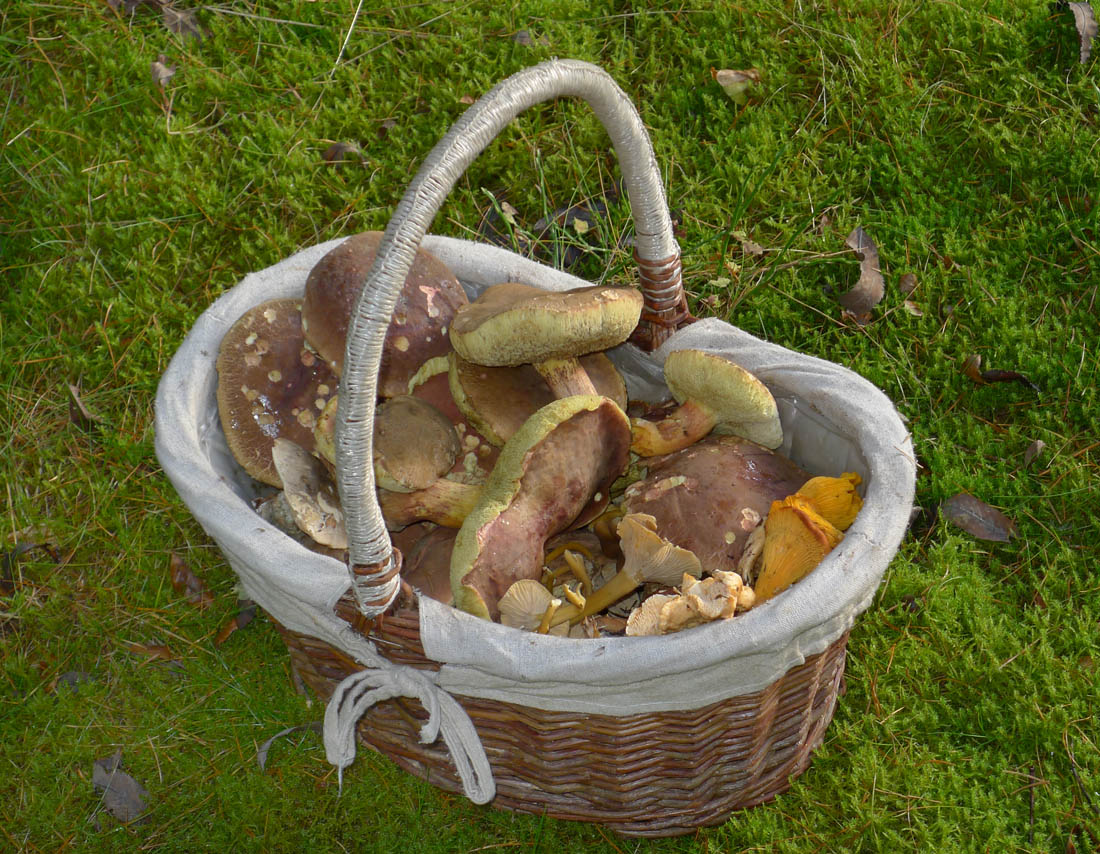 podzimní směs hub...