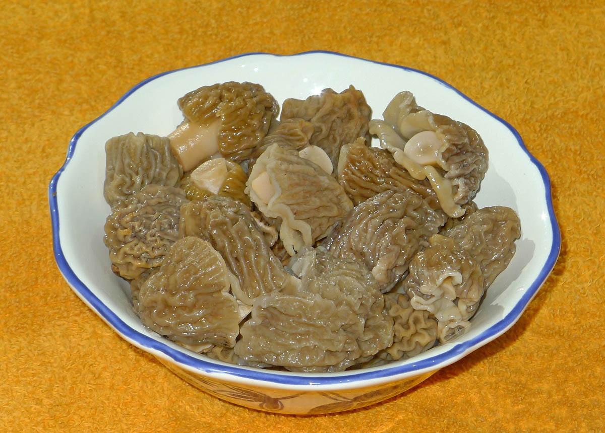 kačenky české, chutné jarní houby