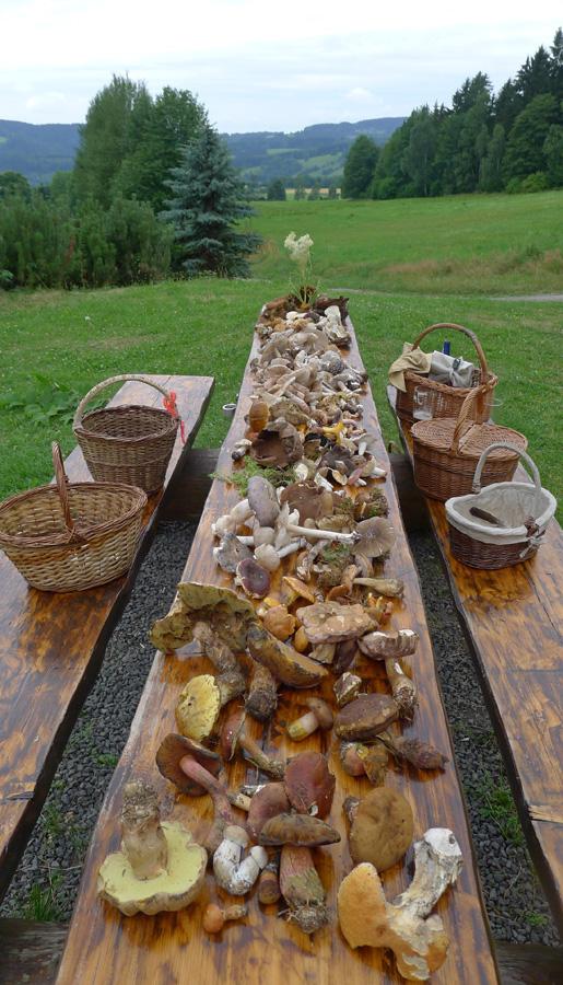 defilé nalezených druhů pro studium adiskuzi vrámci houbařské osvěty