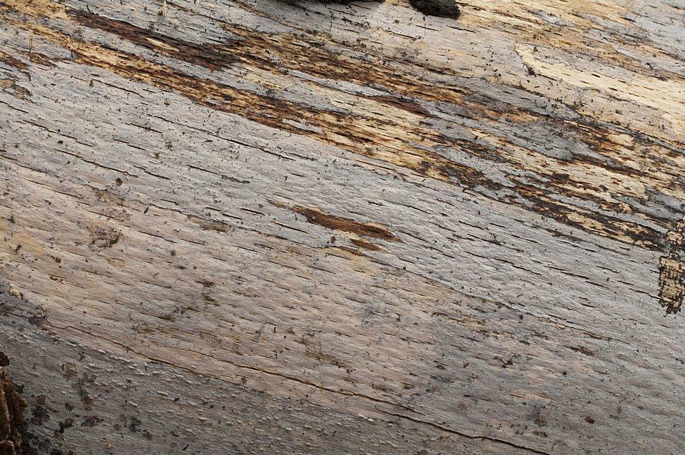 černorosol rozlitý - Exidiopsis effusa - foto: Lucie Zíbarová