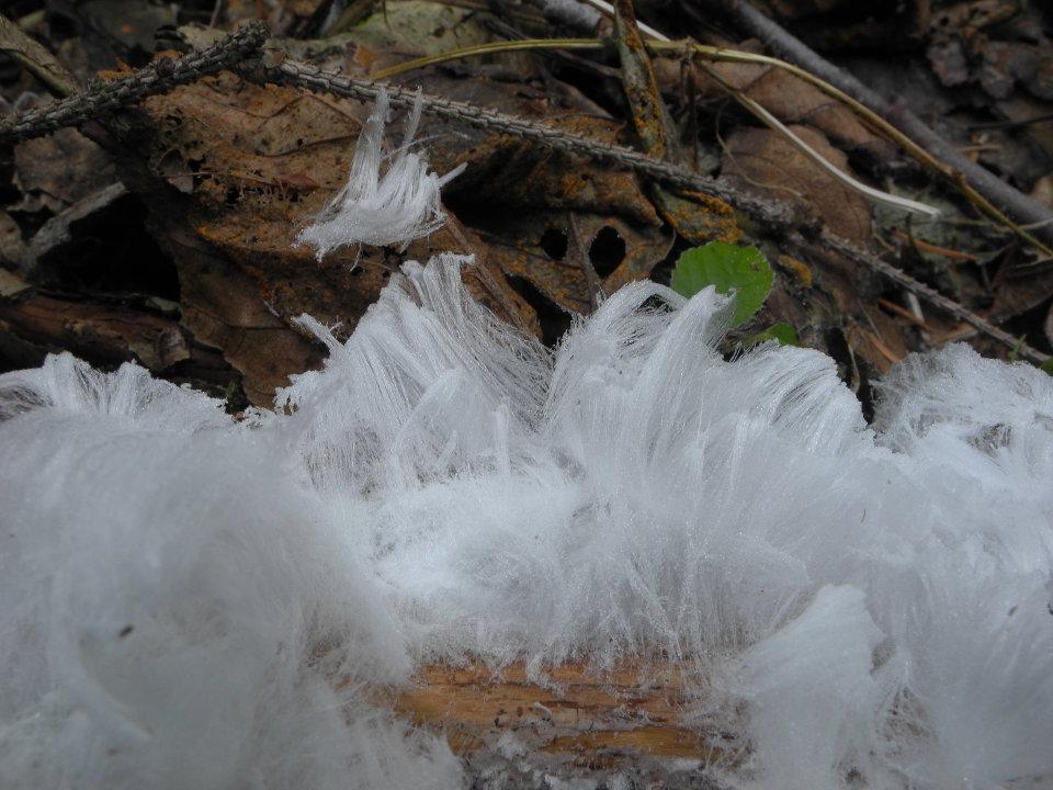 ledové vlasy - foto 13.1.2014 Pavel Petelík
