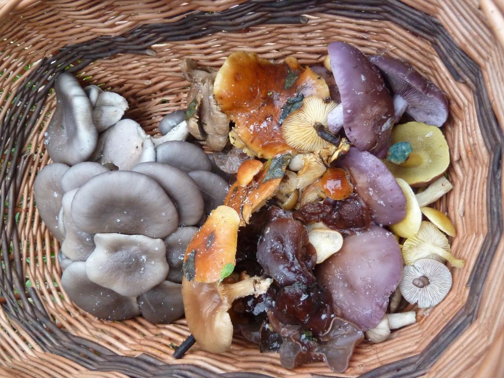 z houbaření za přímrazku - foto: Petr Souček