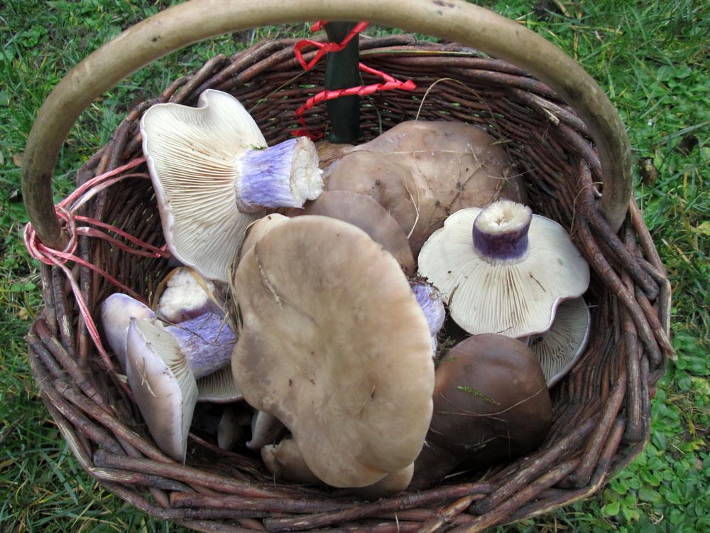 houbařův košík zposledního týdne roku 2015 - foto: Josef Kadeřávek, Čelákovice
