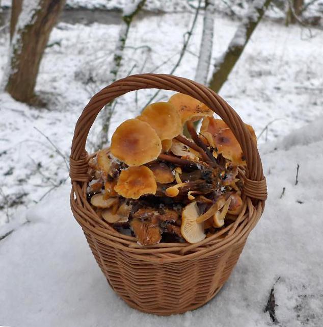košík zimního potěšení pro všechny houbaře kulináře - foto: Petr Souček