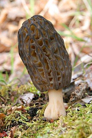jarní houby - tajemné akrásné
