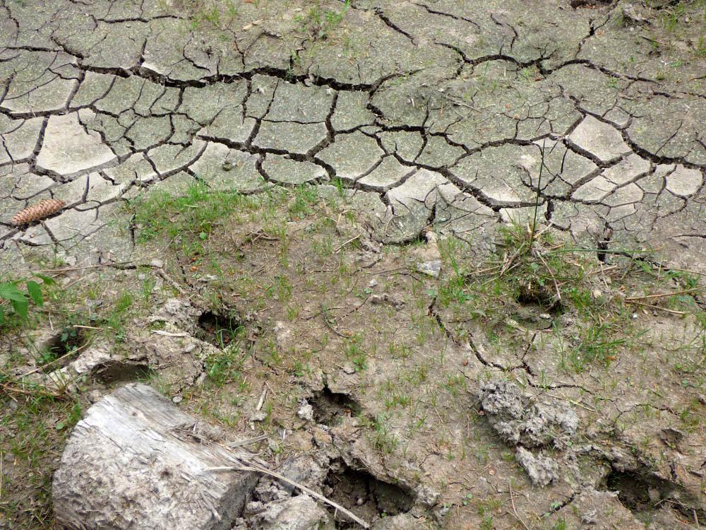 sucho už začíná být patrné...