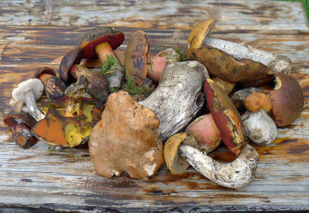 aktuální nálezy Jizerskohorských lesů